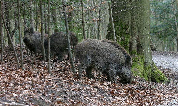 Wildnispark Zürich :: Sihlwald :: Langenberg - Öffnungszeiten
