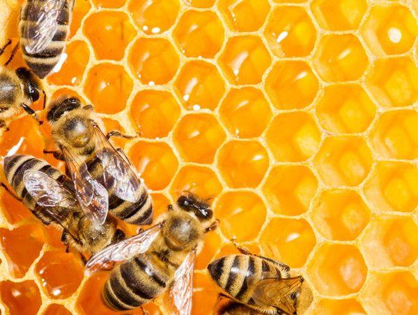 6 metode pentru o productie mai mare de miere