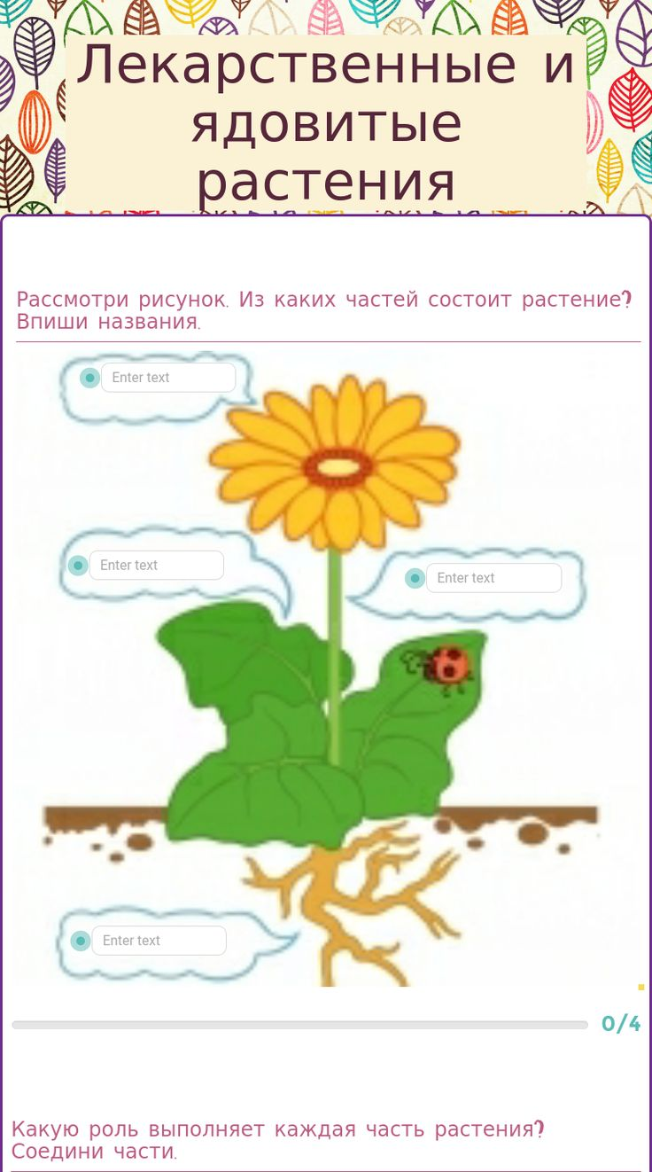 Румянцева Т. Н.