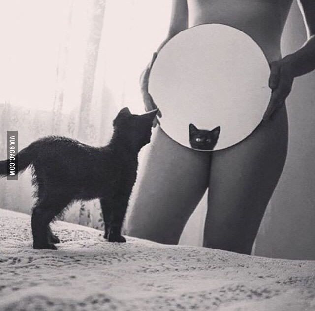 The only acceptable way to show your pussy on the internet - 9GAG