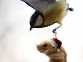 Vuelo de pájaros se puede dividir en dos categorías principales: la subida, o pasiva, y aleteo, o activa, volar. Con alza pájaro se mueve en el aire durante mucho tiempo, no hacer las alas y el uso de las corrientes de aire ascendentes que se producen por el calentamiento desigual de la superficie de la tierra del sol. La velocidad de estos flujos ...