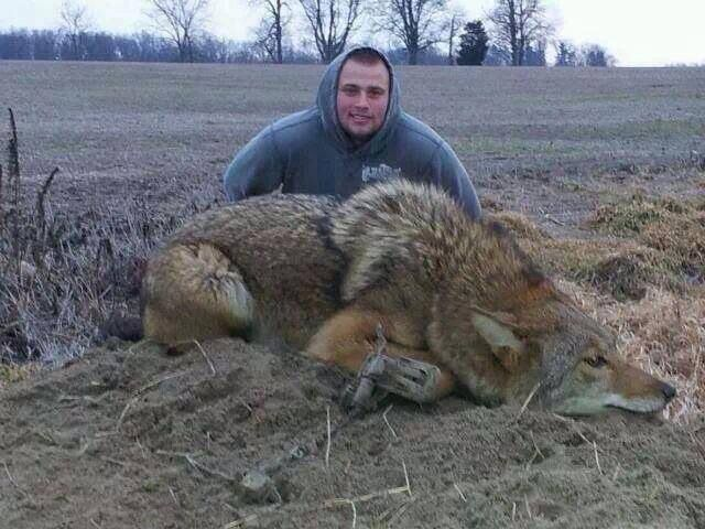 Coydog Nh: 17 Best Images About Coyote & Predator Hunting On