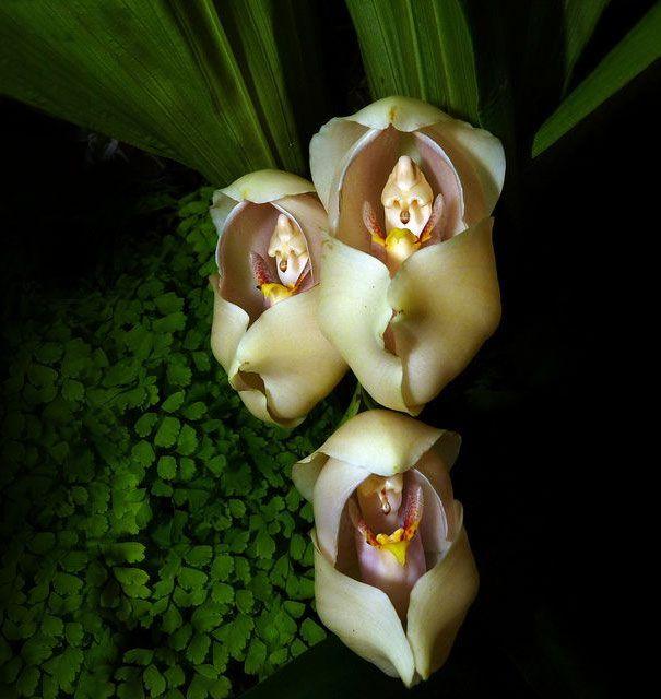 17 Flores Extraordinárias Que Parecem Ser Outra Coisa