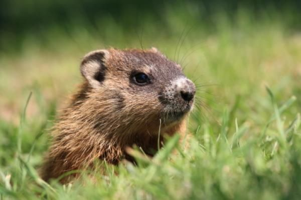 Groundhog Day in United States falls on February 2nd each year.
