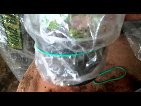 Siembra de orquideas terrestres microinvernadero - YouTube