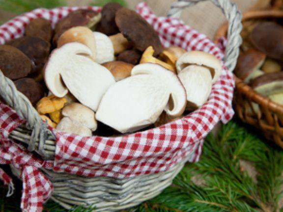 Wer jetzt Pilze sammeln möchte, der trifft auf optimale Bedingungen. EAT SMARTER stellt Ihnen essbare Pilze vor und gibt wichtige Tipps und Tricks zum Sammeln.