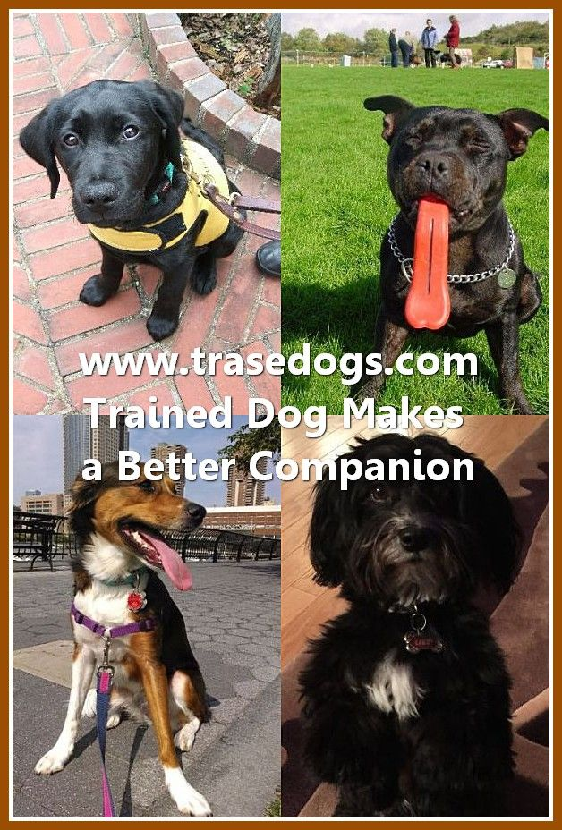 Talking About Dog Dogs Best Dog Shampoo Pet Safe