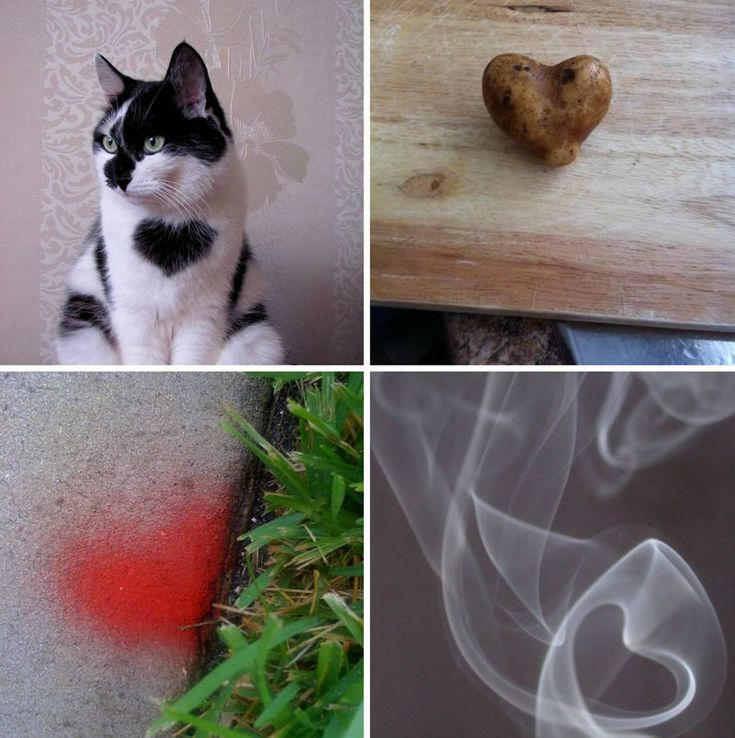 the cat! HeartsInNature6