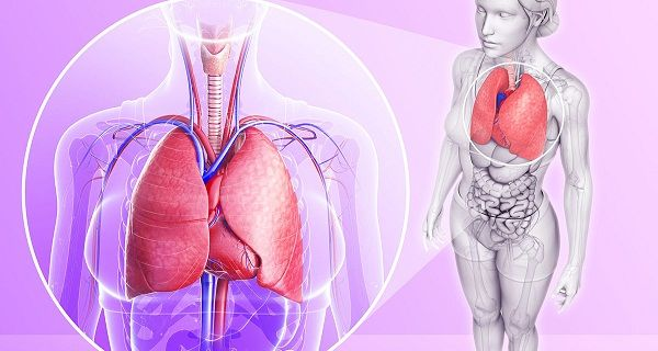 Scientists are Unanimous These 4 Ingredients Will Cleanse Your Lungs!