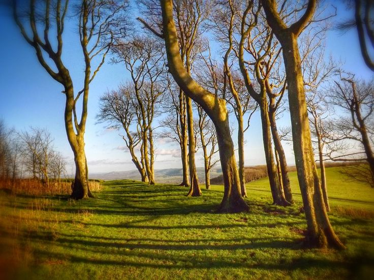 Chanctonbury Ring hill fort.