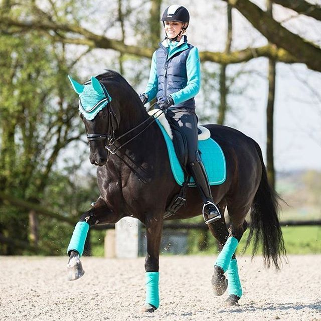 ☪Pinterest → FrenchFanGirl ☼   #horseriding #horseshow #hevonen #horselife #ridsport #showjumping #horse_of_instagram #koni #horseshowlife #pferdeliebe #dressagehorse #stablelife #pferd #equestrianlife #equestrianstyle #hästar #rootd #equestrian #häst #hengst #eurostarequestrian #stute #equestrianism #hest #blackhorse #dressagepferd #dressur #...