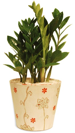 34 best images about folhas zamioculcas on pinterest for Low maintenance indoor plants