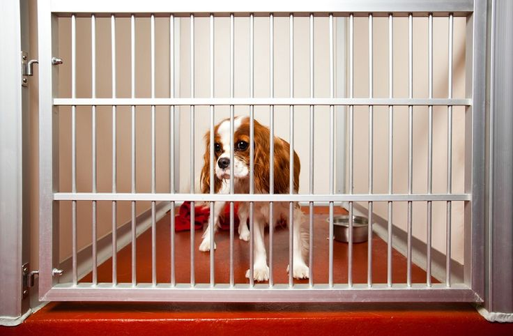 How To Find A Good Doggy Day Care Center.. #DoggyDayCare