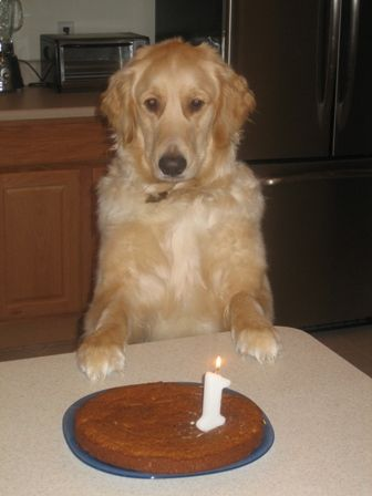 Peanut Butter Banana Cake for Dogs  (Adapted from Just the Recipes)    1 cup whole wheat flour  1 teaspoon baking soda  1/4 cup peanut butter  1/4 cup vegetable oil  1 banana, mashed (about 1/2 cup)  1 teaspoon vanilla extract  1/3 cup honey  1 egg