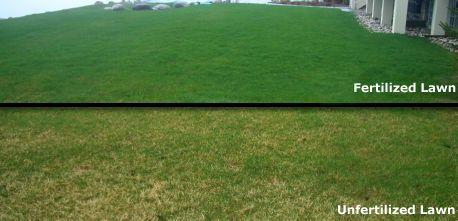 lawn fertilizers content - Buscar con Google