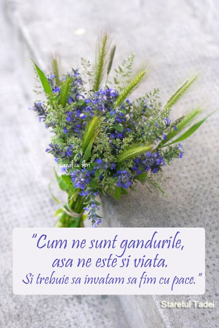 #citat staretul Tadei pace #ganduri #viata #pace #dragoste