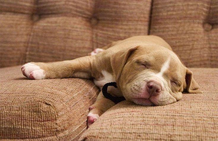 Quando i cani non resistono al sonno: ecco le pose più strane