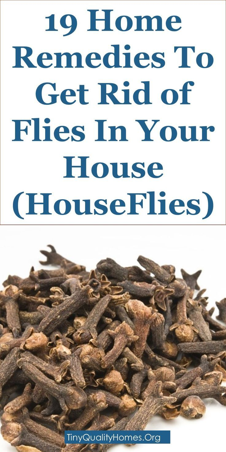 19 Home Remedies To Get Rid of Flies In Your House And Outdoors (HouseFlies) | This Guide Shares Insights On The Following; How To Get Rid Of House Flies Infestation, How To Get Rid Of Flies Outside, Home Remedies To Get Rid Of Flies, Flies In House Where Are They Coming From, How To Keep Flies Out Of House, How To Keep Flies Away Outside, Flies In House All Of A Sudden, House Fly Trap Etc.