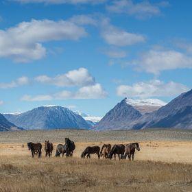 Visit Kazakhstan - DONE
