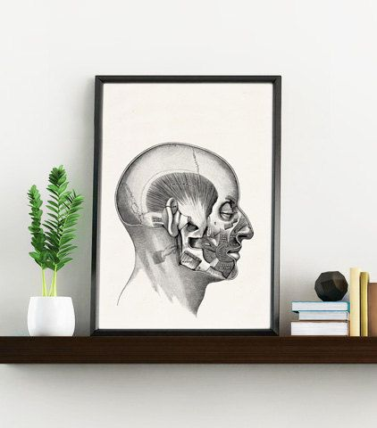 Anatomy art print, Art print Human Head muscles- Science prints A4 wall art- Anatomy art wall decor. Head muscles study, Art Gift WSK119