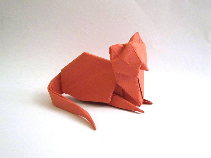 Cat 3 with the paper of Moulin Richard de bas   Flickr - Photo Sharing!