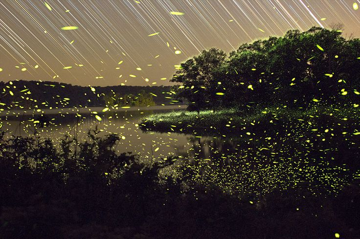 """""""Through the magic of long-exposure photography, Missouri-based photographer Vincent Brady has captured the bright trails of light left behind by fireflies as they perform their nightly dances in the American Midwest."""""""