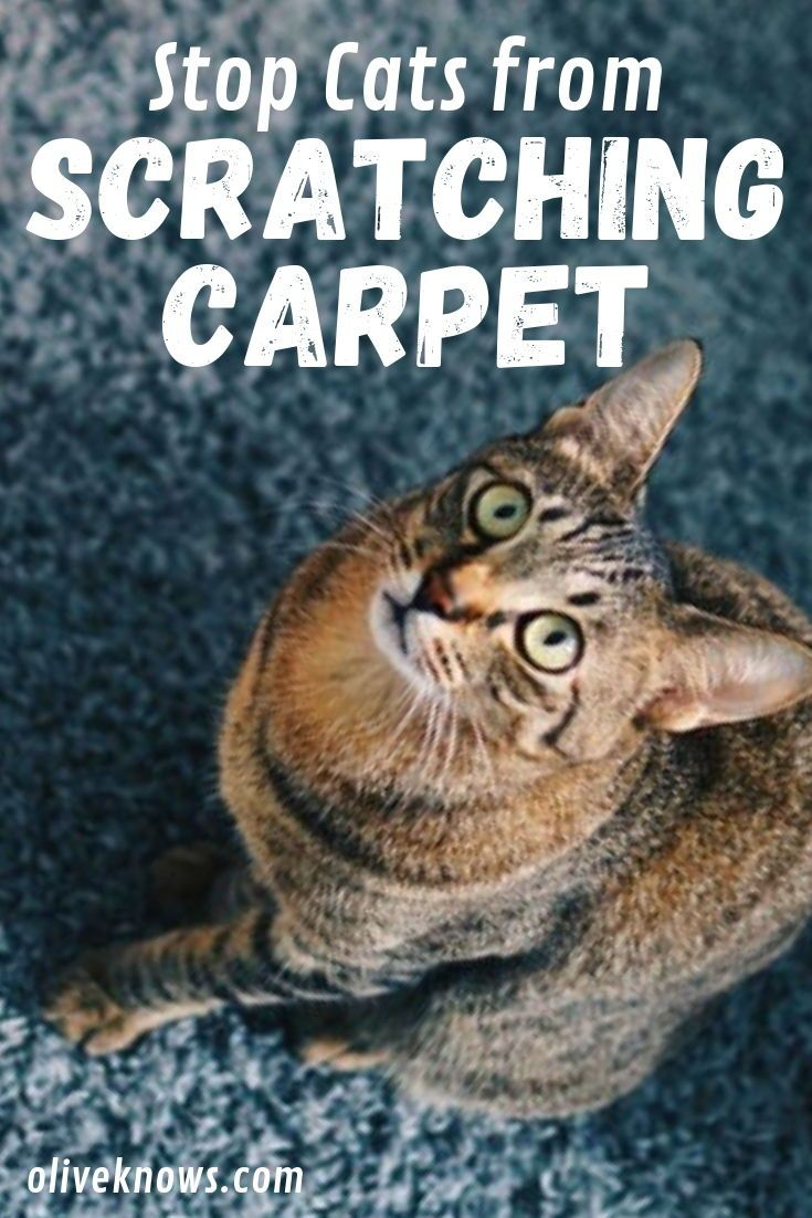 How To Stop Cats From Scratching The Carpet Cat Behavior Problems Cat Care Tips Cool Cats