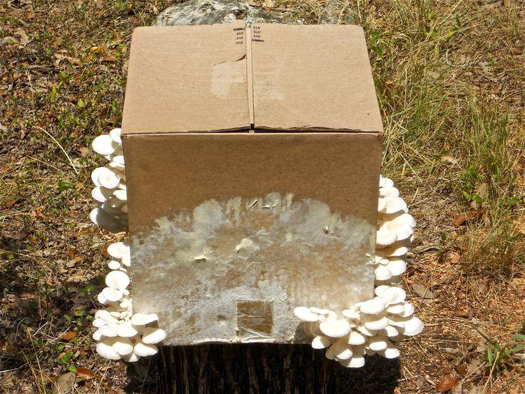 18 Best Images About Mushroom Garden Kit On Pinterest