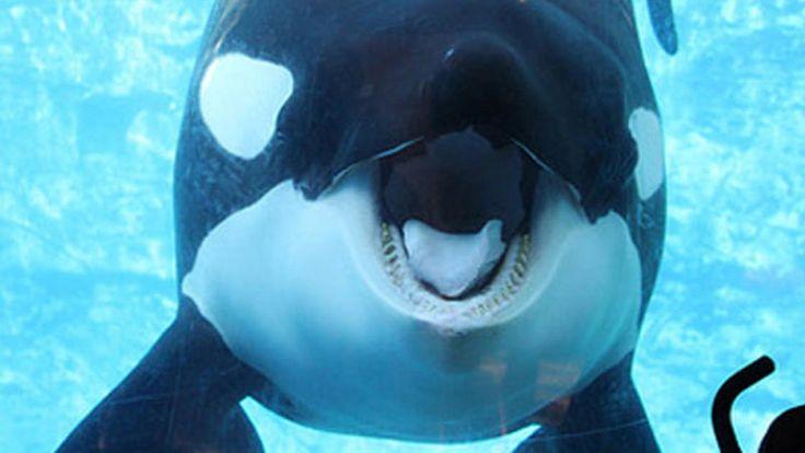 Petition · association de protection des animaux: Libérer l'orque Tilikum · Change.org