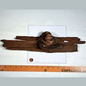 Driftwood Pieces For Sale - Large Driftwood for Decorations, Crafts - Get More great ideas from DriedDecor.com