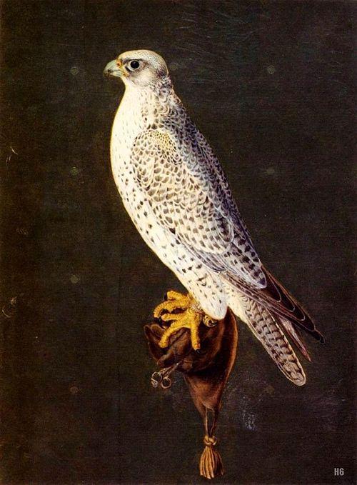 Falcon - 16 C. Giuseppe Arcimboldo (Italian 1526-1593) gouache on parchment