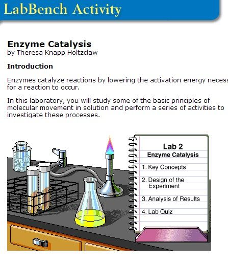 17 best images about enzymes on pinterest different types student and biology humor. Black Bedroom Furniture Sets. Home Design Ideas