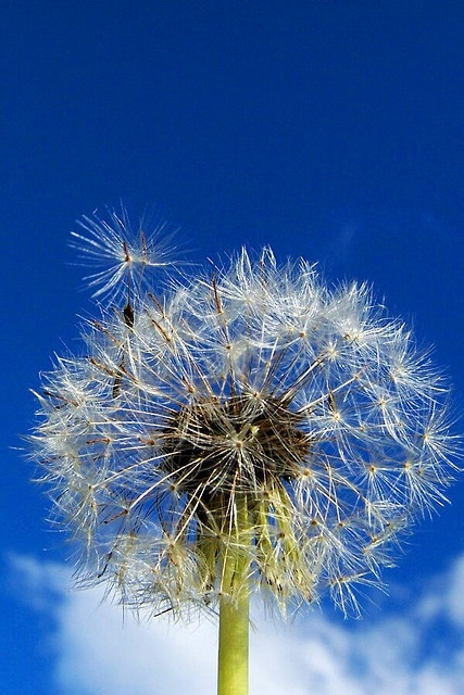 Make a wish and be patient, it may come true! Believe!!!!!!! MIR