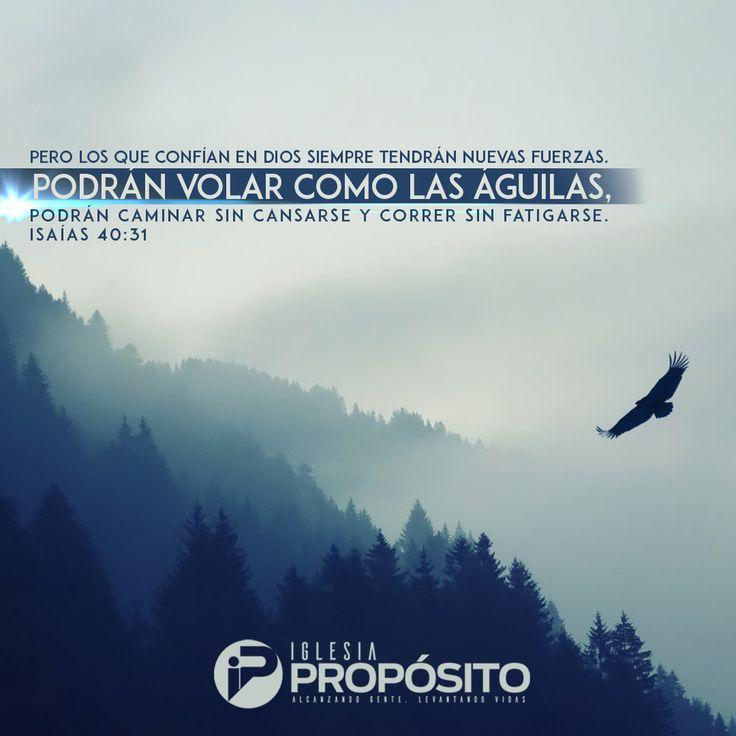 """La confianza en el Señor nos eleva por encima de la prueba. """"Pero los que esperan a Jehová tendrán nuevas fuerzas; levantarán alas como las águilas; correrán, y no se cansarán; caminarán, y no se fatigarán"""". Isaías 40:31"""
