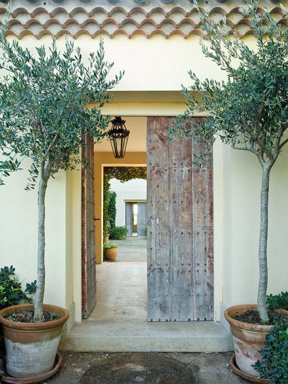 Mediterraner Eingang mit einer aufgearbeiteten Holztür und Olivenbäumen in einfachen Töpfen olivenbaumen mediterraner holztur eingang einfachen einer aufgearbeiteten