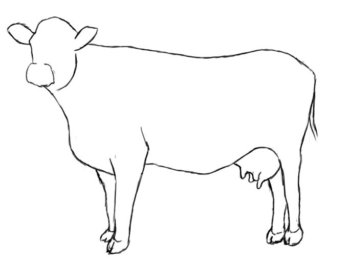 Line Drawing Cow Face : How to draw a cow i am and the