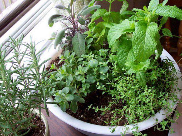 Készíts egy edényben beltéri gyógynövényes kert.