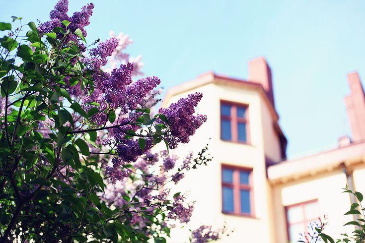 trädgård syrén midsommarkransen Stockholm | Emmas Vintage
