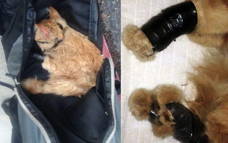 http://wamiz.com/chats/actu/en-fouillant-son-sac-les-policiers-sont-tombes-sur-un-chat-agonisant-et-ligote-avec-du-scotch-7331.html