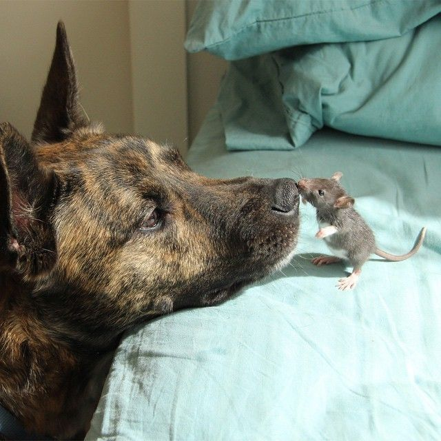 Best Animals Images On Pinterest Dogs Pit Bull Puppies And - 29 cutest dog photos existence