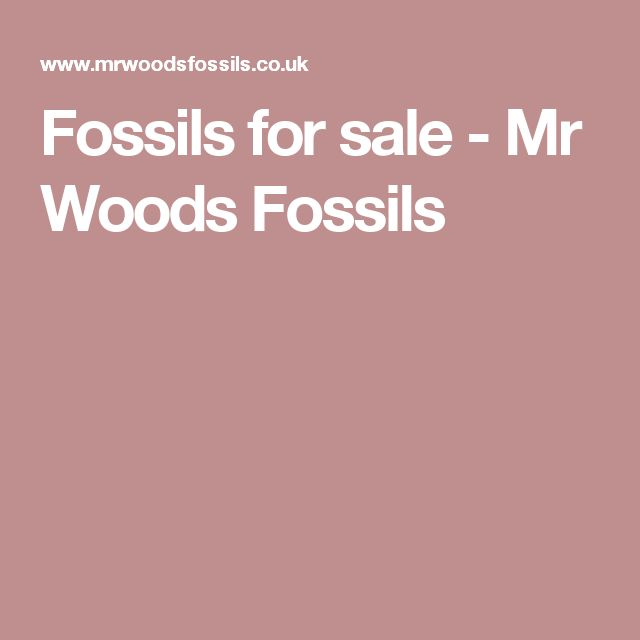 Fossils for sale - Mr Woods Fossils