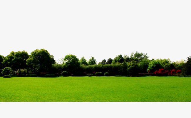 العشب الأخضر الخلفية Green Grass Background Grass Background Grass Clipart