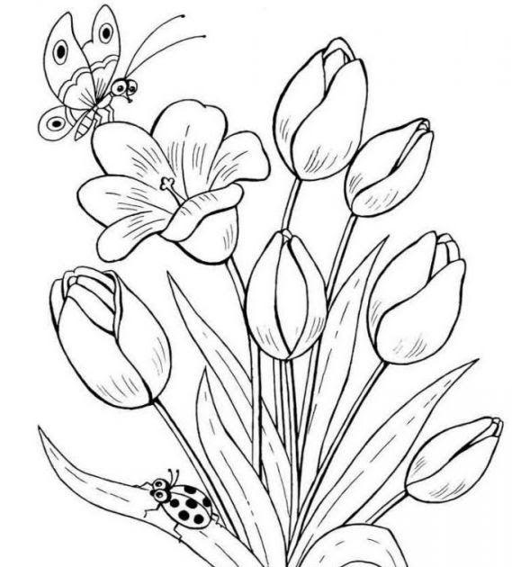 34 Gambar Bunga Tidak Diwarnai 39 Gambar Sketsa Bunga Indah
