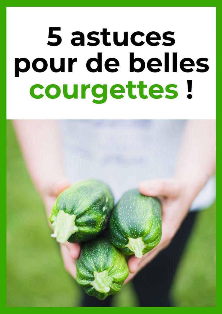 five astuces pour de belles courgettes !