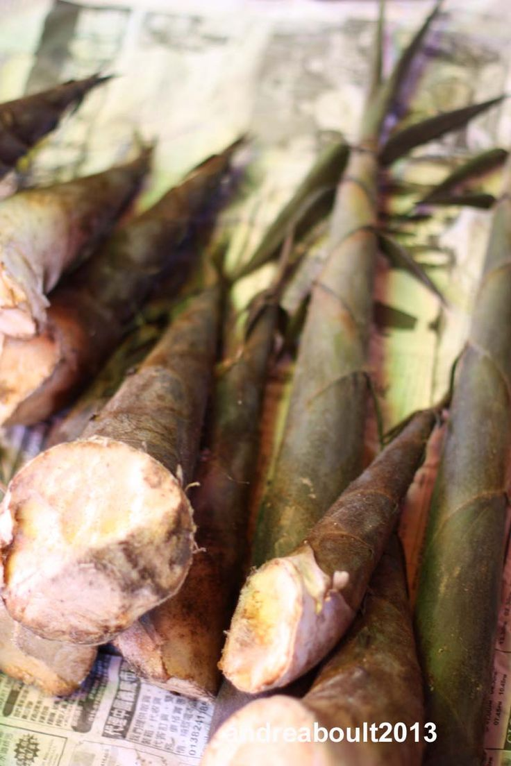 Freshly harvested bamboo shoots
