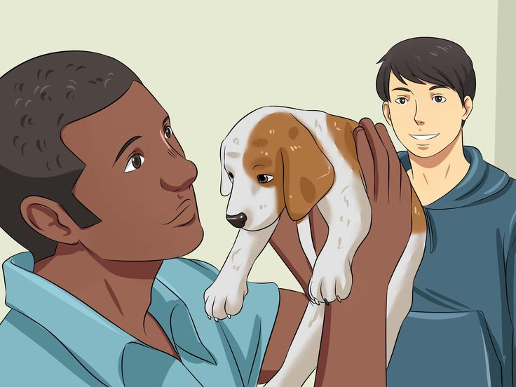New puppies have no understanding of the proper place to eliminate until their owners housebreak them. House-training is an important part of caring for a puppy. With some basic knowledge of how to train your puppy, he'll master it in no...