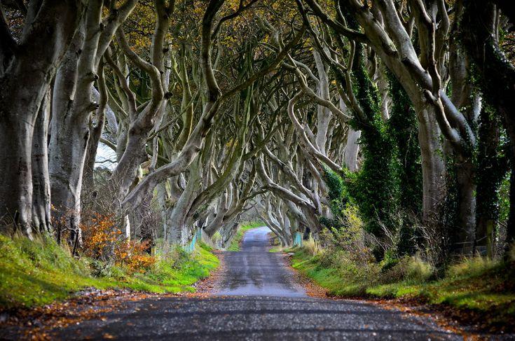 Dark Hedges – Észak-Írország