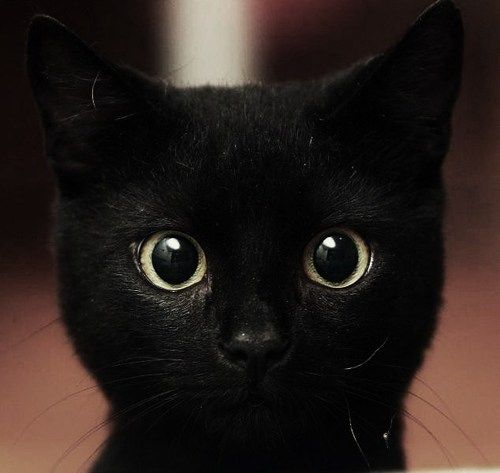 Gorgeous. He's/She's beautiful just like my black cat. I hate the superstition that's around them. It's such garbage and bs!
