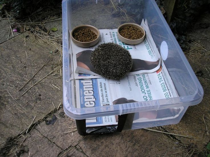 Plastic Hedgehog Feeder
