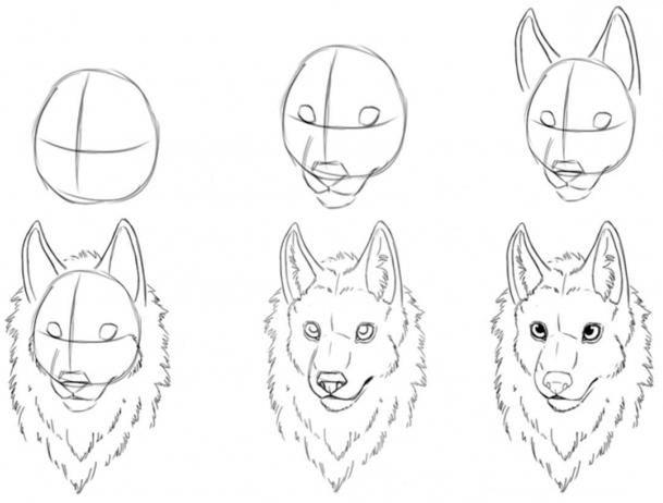 выбрать волк рисунок поэтапно кабачков